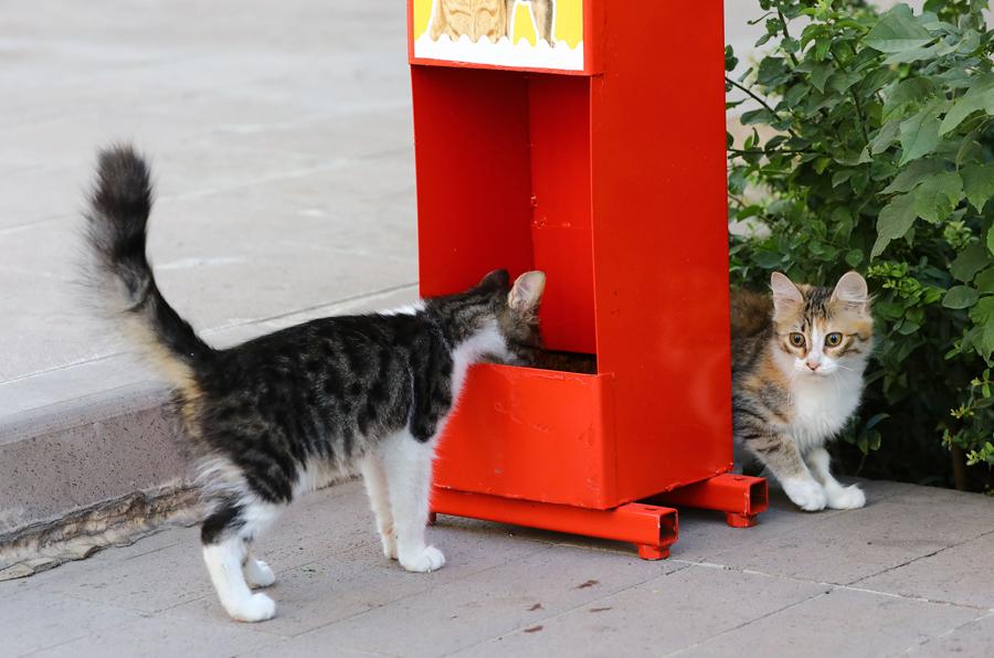 Keçiören'de kedi ve köpekler için mama istasyonları kuruldu